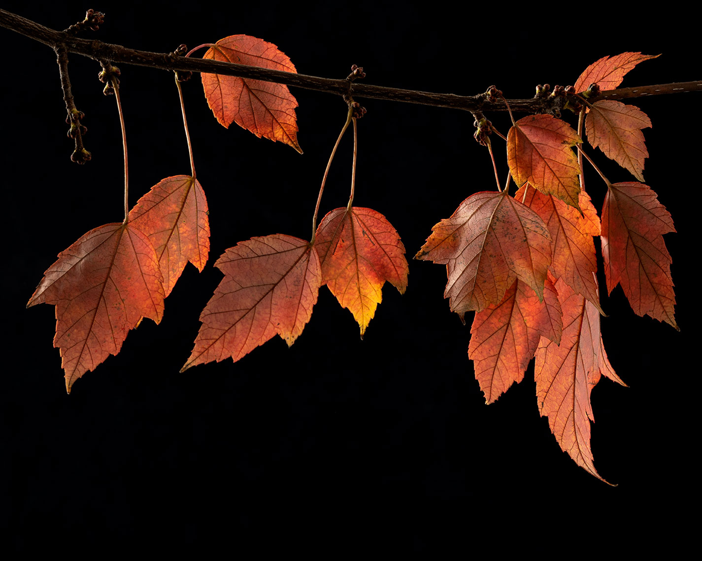 Leaves-15-copy